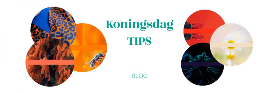 Koningsdag TIPS